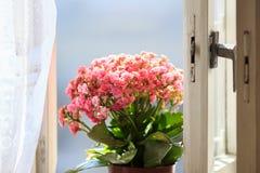 Schönheit auf dem Fenster Stockbilder