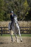 Schönheit auf galoppierendem Pferd Stockfoto
