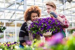 Schönheit, denkend an das Kaufen von wohlriechenden eingemachten purpurroten Petunien Lizenzfreie Stockfotografie