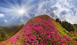Schönheit der Alpen Stockbilder