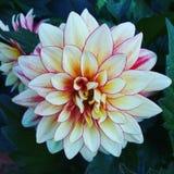 Schönheit in der Blüte Lizenzfreie Stockfotografie