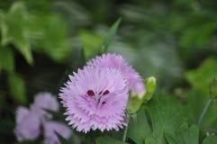 Schönheit der frischen Blumen des Naturgrünblatt-Extremabschlusses oben Lizenzfreie Stockbilder