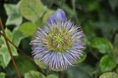 Schönheit der frischen Blumen des Naturgrünblatt-Extremabschlusses oben Lizenzfreie Stockfotografie