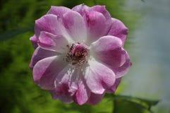 Schönheit der frischen Blumen des Naturgrünblatt-Extremabschlusses oben Stockbilder