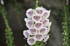 Schönheit der frischen Blumen des Naturgrünblatt-Extremabschlusses oben Stockbild