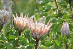 Schönheit der frischen Blumen des Naturgrünblatt-Extremabschlusses oben Stockfotos