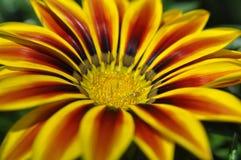 Schönheit der frischen Blumen des Naturgrünblattes Stockfotos