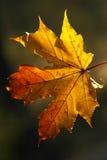 Schönheit der Herbstformulare Lizenzfreies Stockbild