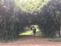 Schönheit der Mutter Natur Revels es durch Bambusbäume Stockbild