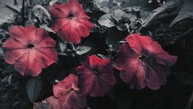 Schönheit der Natur stockbilder