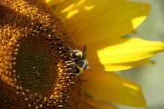 Schönheit in der Natur stockfotografie