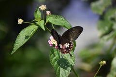 Schönheit der Natur lizenzfreies stockfoto