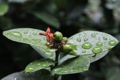 Schönheit der Natur Lizenzfreies Stockbild