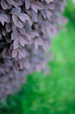 Schönheit der Natur Lizenzfreie Stockfotografie