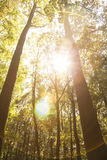 Schönheit der Natur Lizenzfreie Stockfotos