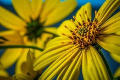 Schönheit der Natur Lizenzfreie Stockbilder