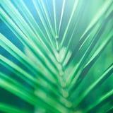 Schönheit der Tropen stockfoto