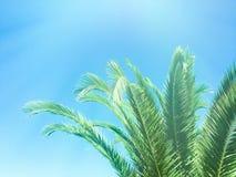 Schönheit der Tropen stockfotografie
