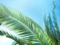 Schönheit der Tropen stockbilder