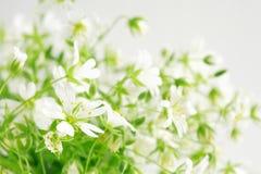 Schönheit der wilden Blumen Stockbild