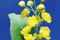 Schönheit der wilden Blumen Stockfoto