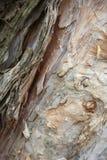 Schönheit des Baums Stockbilder