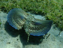 Schönheit des Meeresflora und -fauna stockfotos