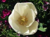 Schönheit einer Blume Stockbild