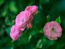 Schönheit einer Blume Lizenzfreies Stockfoto