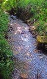 Schönheit einer Landschaft, der Bäume und des Holzes, der wilden und fantastischen Natur lizenzfreies stockfoto