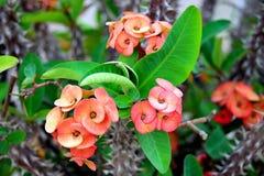 Schönheit eines Kaktus Lizenzfreie Stockfotos