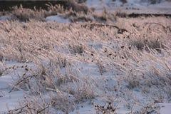Schönheit ftrozen Gras Lizenzfreies Stockfoto