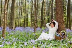 Schönheit im Glockenblumewald Stockfoto