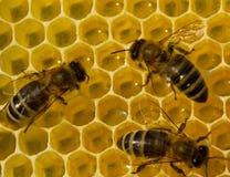 Schönheit innerhalb des Bienenstocks Bienen wandeln Nektar in Honig um Stockfotos