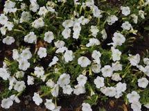 Schönheit und Liebe in Form von frischen Blumen Lizenzfreie Stockfotos