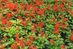 Schönheit und Liebe in Form von frischen Blumen Stockbilder