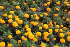 Schönheit und Liebe in Form von frischen Blumen Stockbild