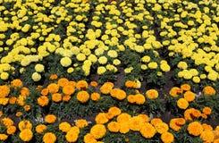 Schönheit und Liebe in Form von frischen Blumen Lizenzfreie Stockbilder
