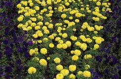 Schönheit und Liebe in Form von frischen Blumen Lizenzfreies Stockbild