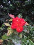 Schönheit unter dem Regen stockfotos