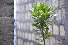 Schönheit von Blättern der Anlage stockbilder