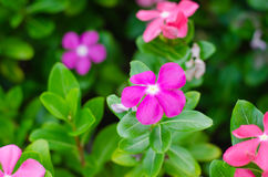Schönheit von Blumen Lizenzfreies Stockfoto