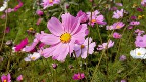 Schönheit von den Blumen, die wie großes aussehen Stockfotos