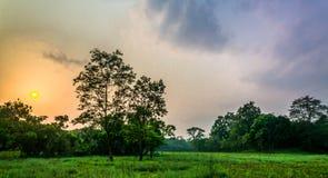 Schönheit von Farben in wildem Lizenzfreies Stockfoto