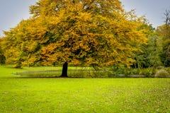 Schönheit von Herbstlandschaften Stockfotografie