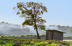 Schönheit von Rasikbill an Buxa-Wald lizenzfreie stockfotos