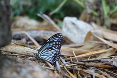 Schönheit von Schmetterlingen Lizenzfreies Stockfoto