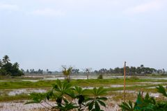 Schönheit von Schongebiet Kumarakom Keralabird lizenzfreies stockfoto