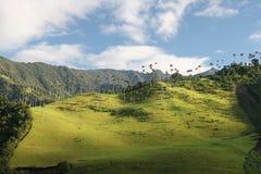 Schönheit von Valle de Cocor lizenzfreie stockfotografie