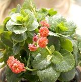 Schönheit zuhause pflanzen lizenzfreies stockbild